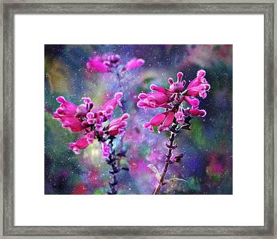 Celestial Blooms-2 Framed Print by Kathy M Krause