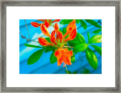 Framed Print featuring the photograph Celestial Skies Budding Azalea by Aimee L Maher Photography and Art Visit ALMGallerydotcom