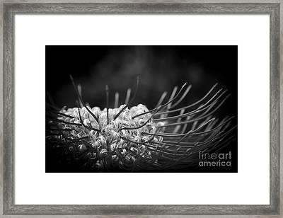 Celestrial Framed Print by Sharon Mau