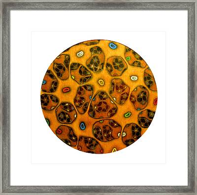Cell Network Framed Print by Nancy Mueller