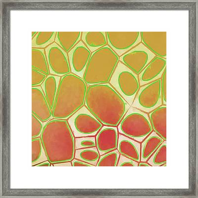 Cells Abstract Five Framed Print by Edward Fielding