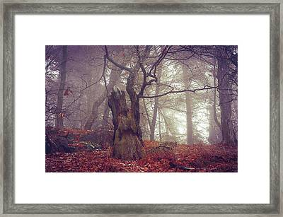 Celtic Guardian Framed Print