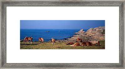 Celtic Horses On The Shore, Finistere Framed Print by Panoramic Images