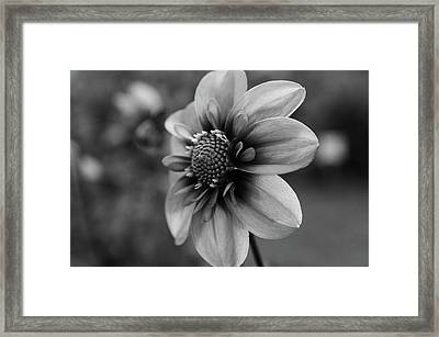 Center Attraction Framed Print