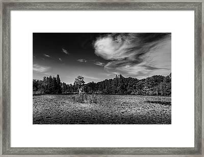 Center Cypress - Bw Framed Print
