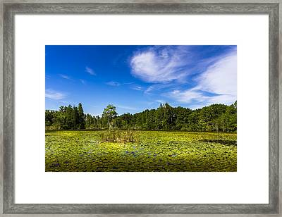 Center Cypress Framed Print by Marvin Spates