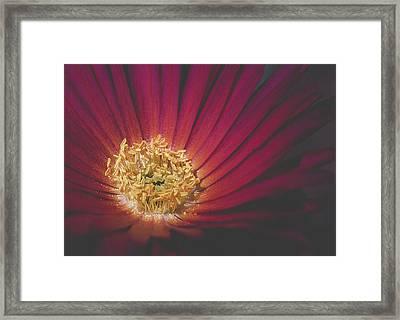 Center Gold Framed Print