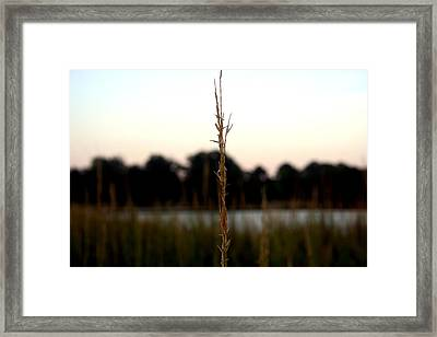 Center Of Attention Framed Print by Alexandra Harrell