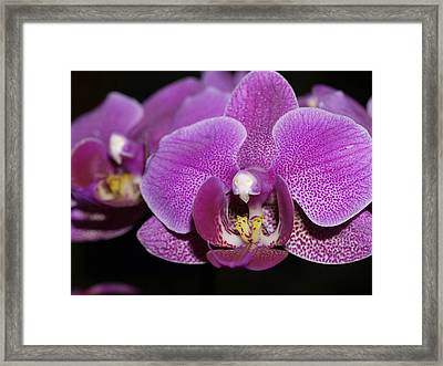 Center Of Attention Framed Print by Joyce Hutchinson