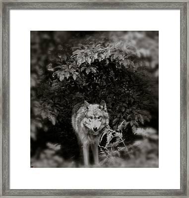 Center Of The Forest Framed Print by Debra     Vatalaro
