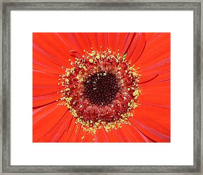 Center Seeds Framed Print