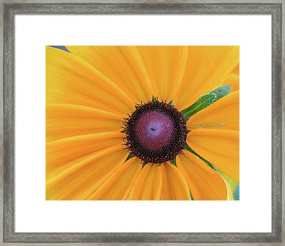 Framed Print featuring the photograph Center Stage by David Coblitz
