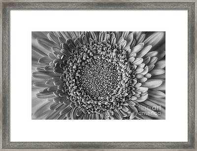 Center Stage Framed Print