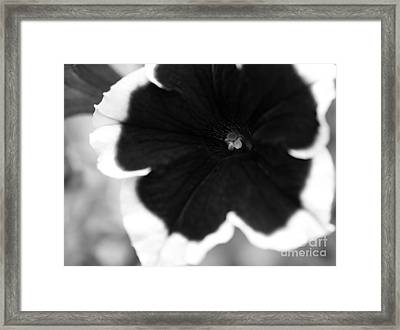 Centered Framed Print by Amanda Barcon