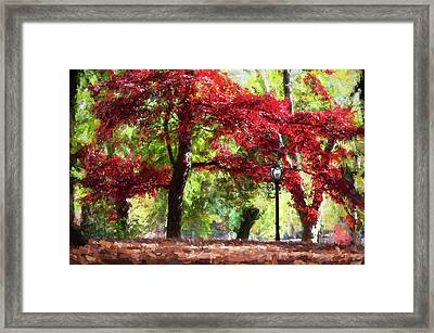 Central Park In Manhattan Framed Print