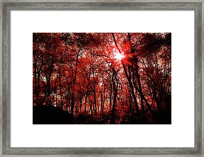 Framed Print featuring the photograph Central Park  by Lucian Capellaro