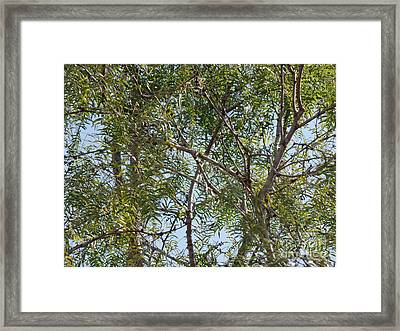 Framed Print featuring the photograph Central Texas Sky View Through Mesquite Trees by Ray Shrewsberry