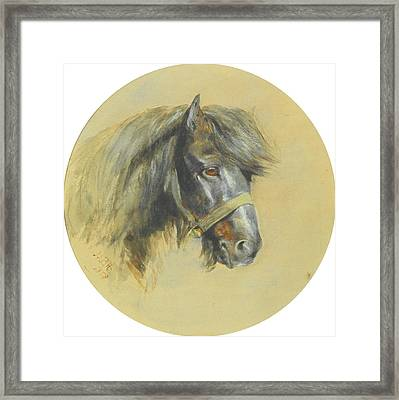 Century Study Of A Pony Head Framed Print
