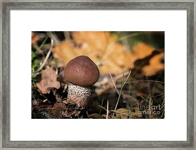 Cep Mushroom Framed Print by Jane Rix