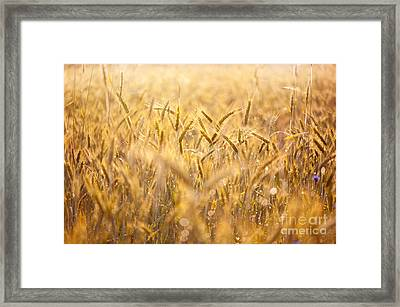 Cereal Field After The Rain Framed Print by Arletta Cwalina