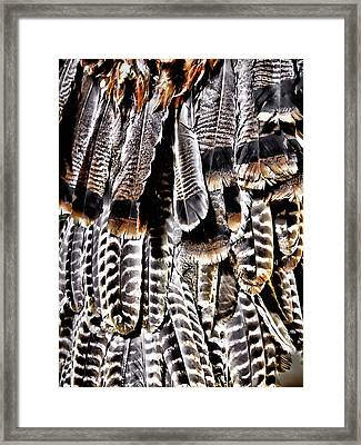 Ceremonial Feathers Framed Print by Ann Powell