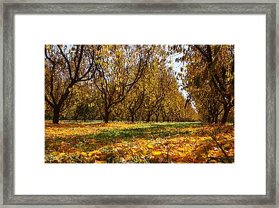 Ceres Orchard - Fall Framed Print by Stephen Bonrepos