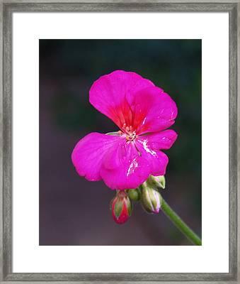 Cerise Serenade Framed Print by James Granberry
