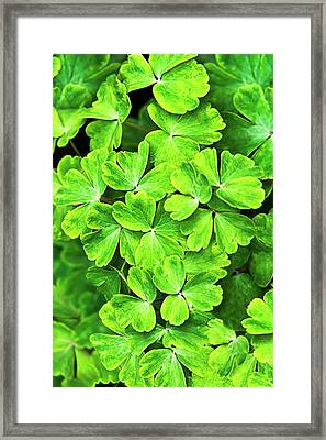 Certain Green Framed Print by Christina Rollo
