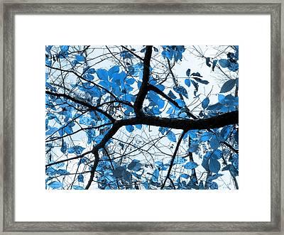 Cerulean Leaves Framed Print by Shawna Rowe