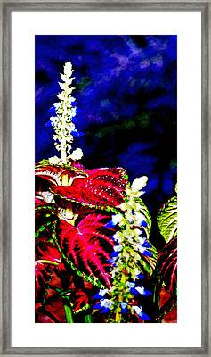 Cf1a Framed Print by James Granberry