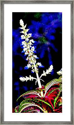 Cf1e Framed Print by James Granberry