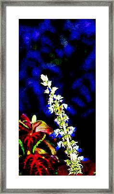 Cf1f Framed Print by James Granberry
