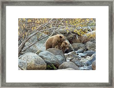 Cub Row Framed Print