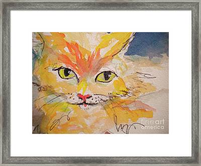 Cfo  Chief Furry Officer Of Jilly Willy Art Framed Print