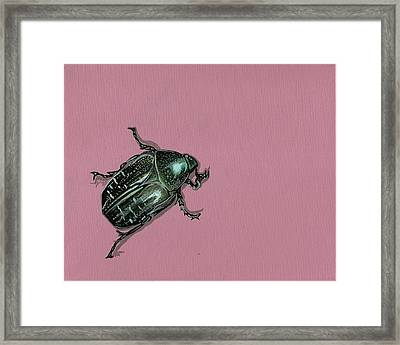 Framed Print featuring the painting Chaf Beetle by Jude Labuszewski