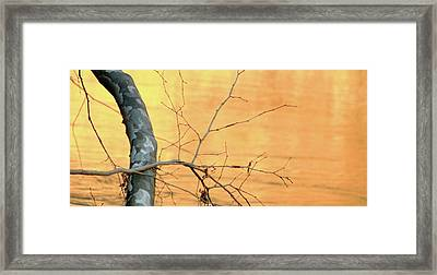 Framed Print featuring the photograph Chagrin River Gold by Bruce Patrick Smith