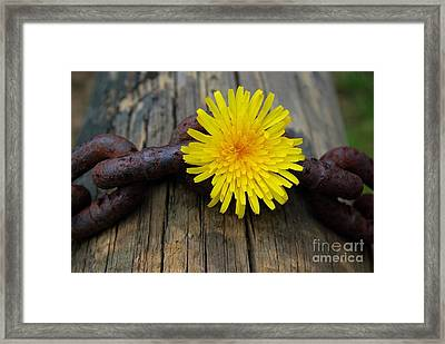 Chained Beauty Framed Print