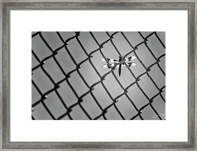 Chainlink Dragon Fly Framed Print