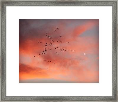 Chalco Hills Sunset -geese Framed Print by Kathy M Krause