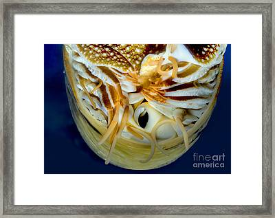 Chambered Nautilus Face, Head-on Framed Print