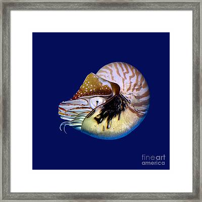 Chambered Nautilus In The Deep Blue Framed Print
