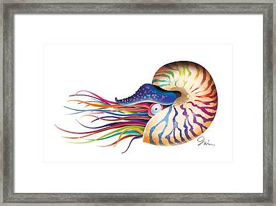 Chambered Nautilus On White Framed Print