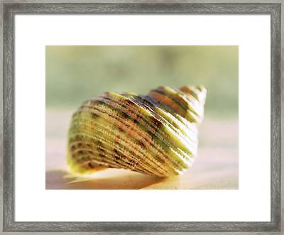 Chambered Framed Print by Tom Druin