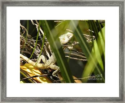 Chameleon 1 Framed Print