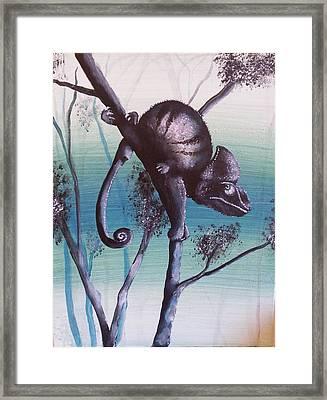 Chameleon Calyptratus Framed Print by Judit Szalanczi