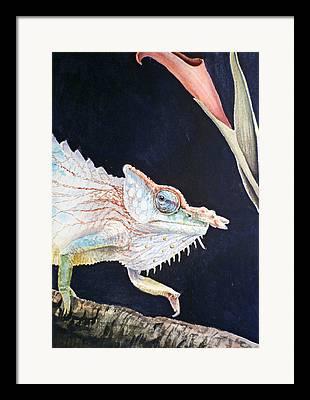 Cameleon Framed Prints