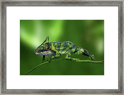 Chameleon Bodypainting Illusion Framed Print