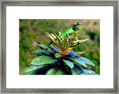 Chameleon Framed Print