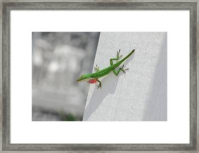 Chameleon Framed Print by Robert Meanor