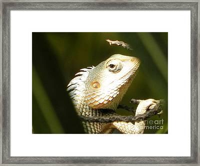 Chameleon Up-close Framed Print